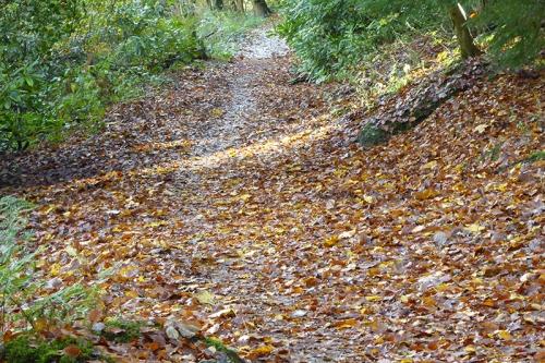 Leafy path beside Esk