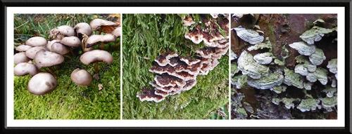 becks walk fungus