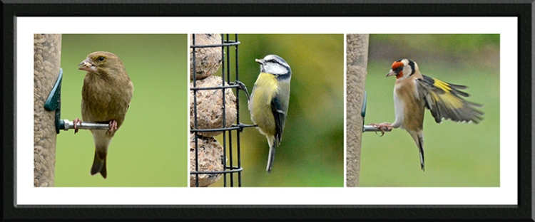 greenfinch, blue tit and goldfinch