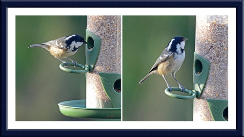 coal tit on seed feeder