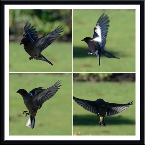 shadowy flying birds