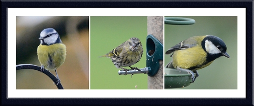 blue tit siskin and great tit