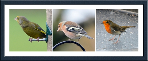 greenfinch, chaffinch and robin
