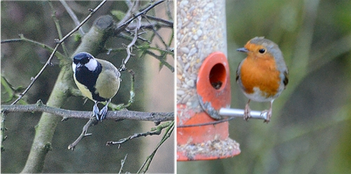 great tit and robin