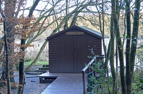 red squirrel hide Eskrigg