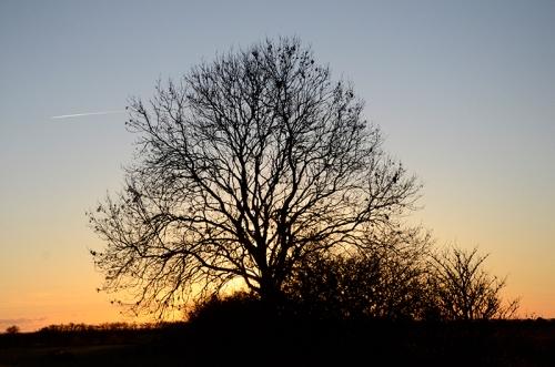 tree Gretna