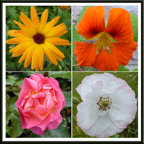 calendula, nasturtium, rose and poppy