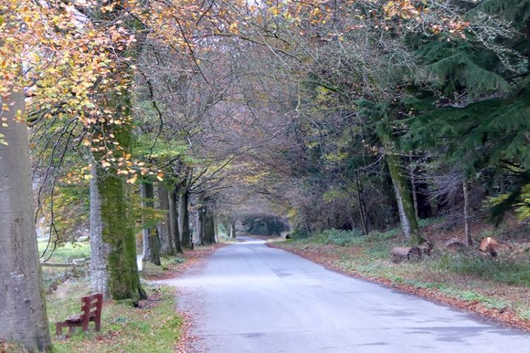 Lodge Walks in November
