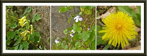 wild flowers on the scholars field