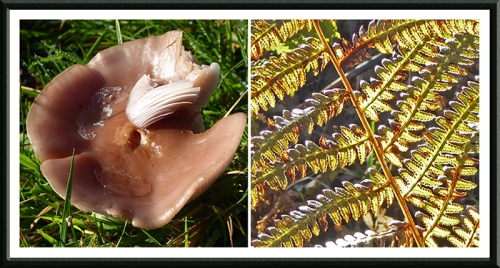 fungus and fern