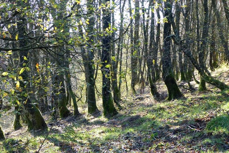 Tarras woods
