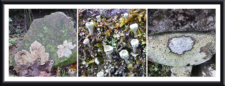 lichen and leaves