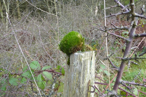 Newcastleton road fencepost
