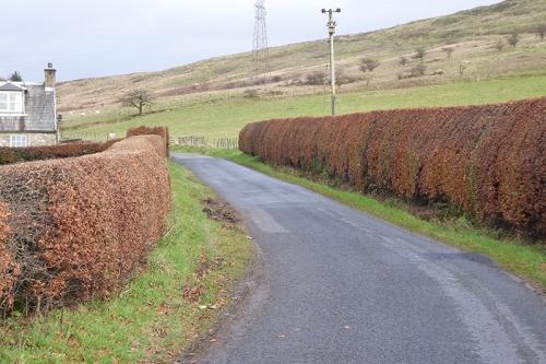 Newcastleton road