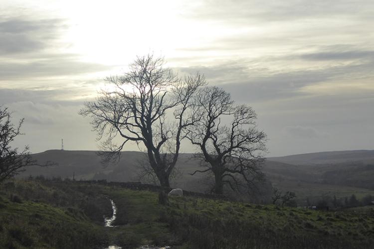 Whita trees