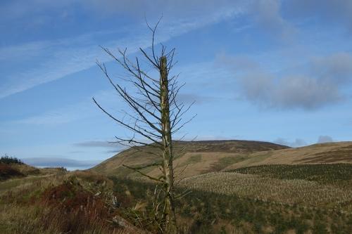 tarras track tree