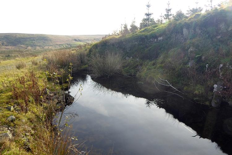 tarras track pond