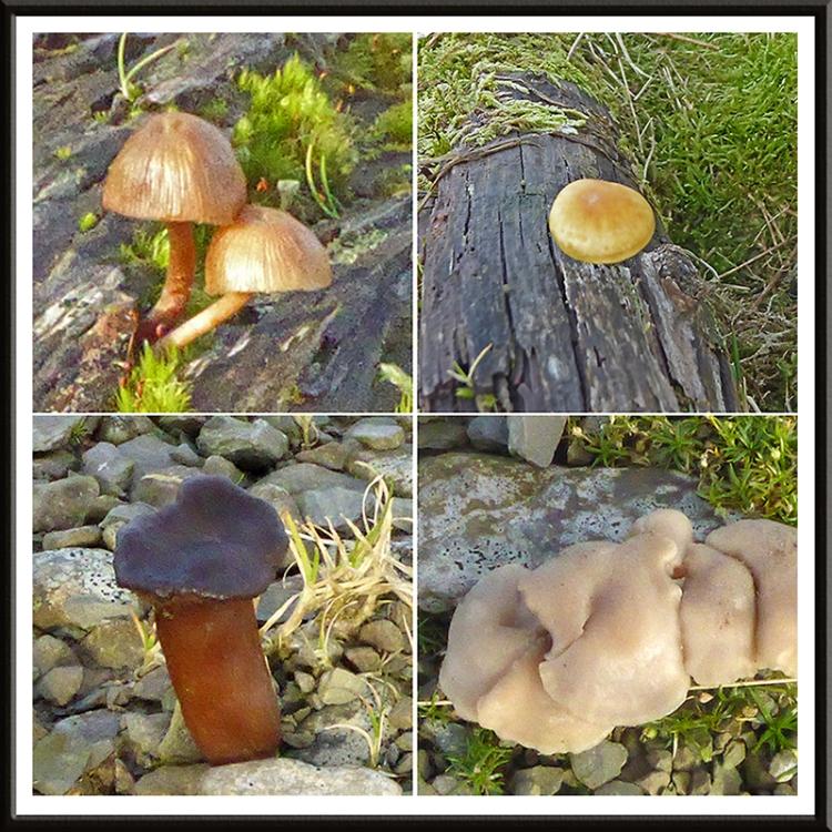 fungus on Tarras track