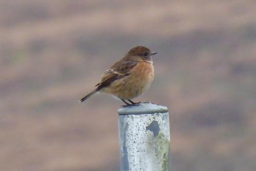 bird on pole