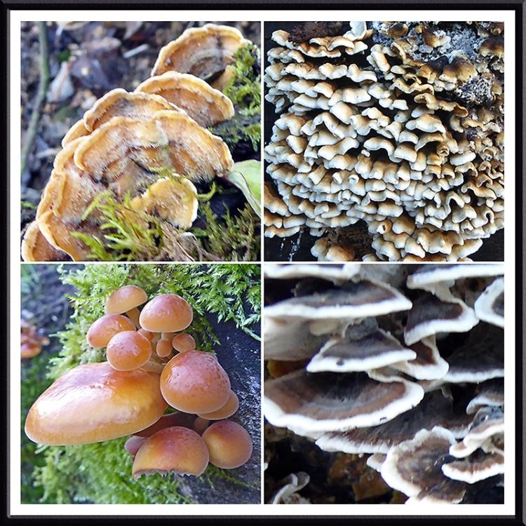 Rowanburn timber fungi