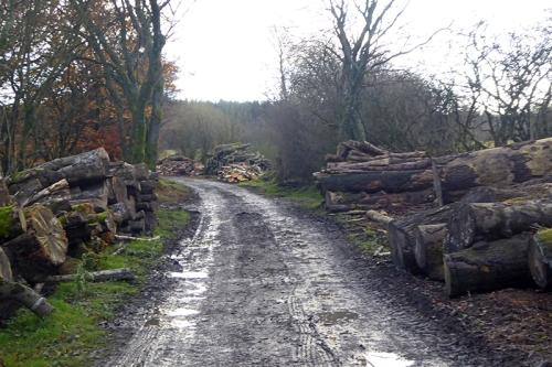 Rowanburn timber