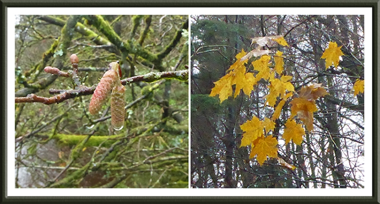 catkin and leaves