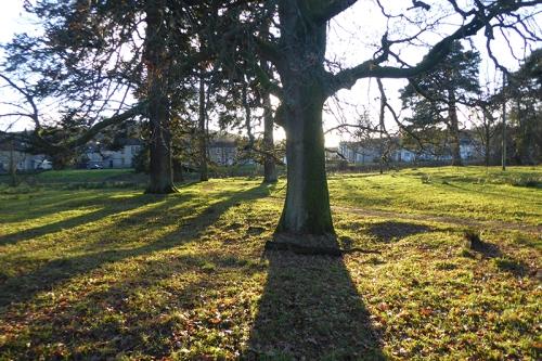 tree in low sun