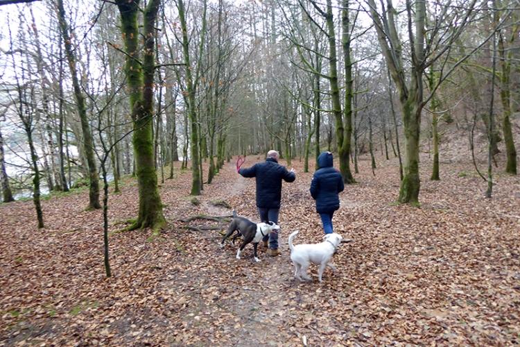Milo and Tara take Tony for a walk