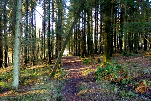 Wood at Hallpath