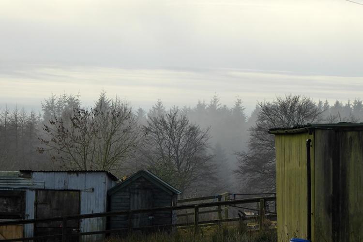 Becks mist