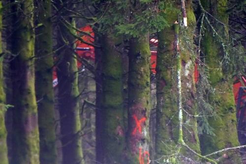 Becks wood