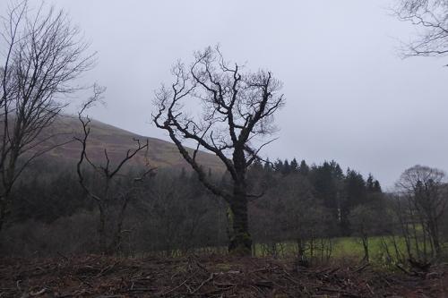 tree pheasant hatchery