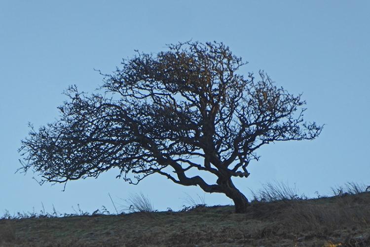 tree on warbla
