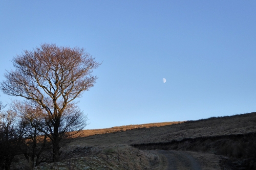 Moon over warbla
