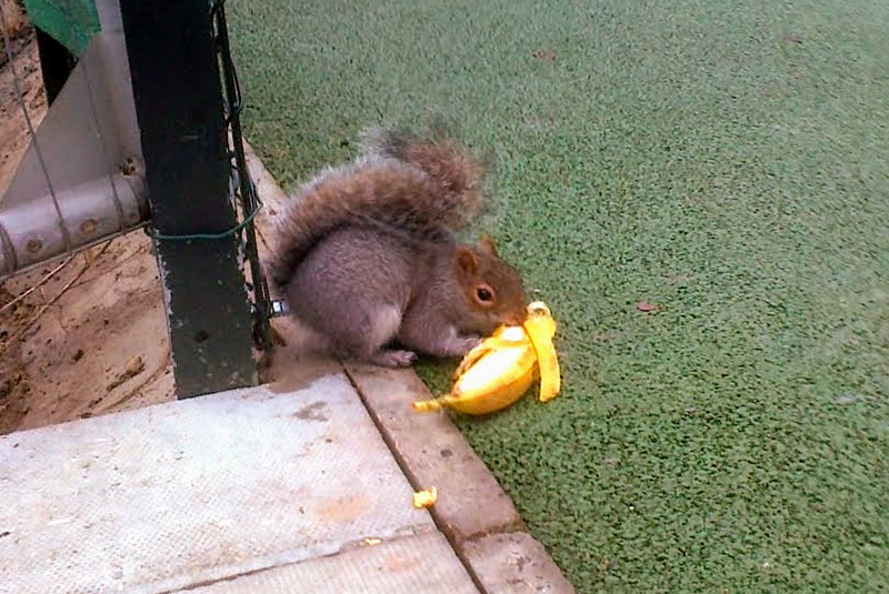 Squirrel in R. Park 001