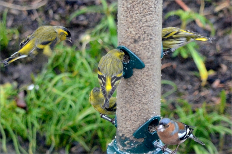busy feeder from upstairs