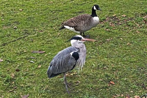 LOndon heron