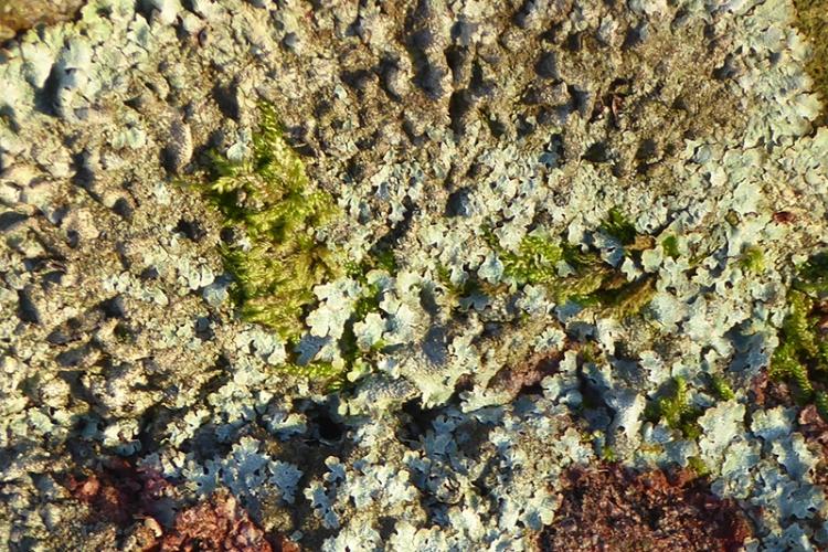 lichen at Monument