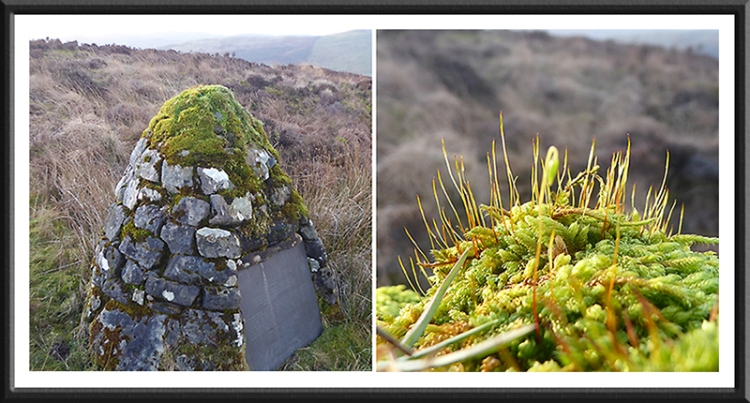 cairn and moss