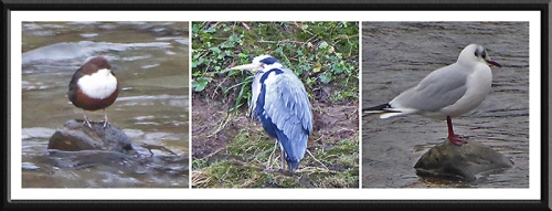 waterside birds