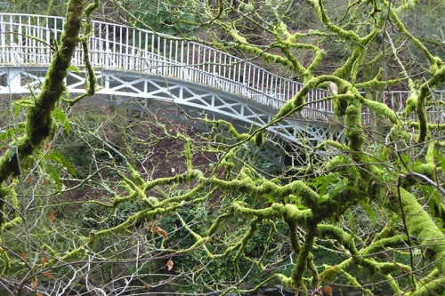 mossy tree and Duchess bridge