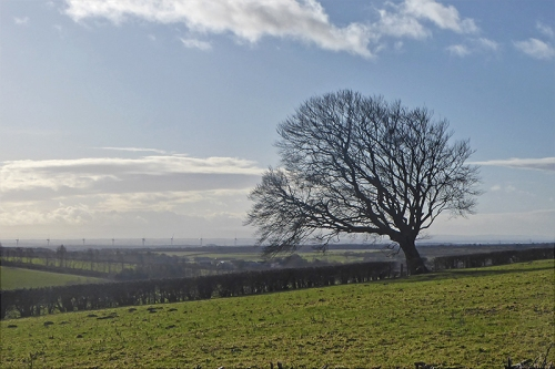 tree and gretna turbines