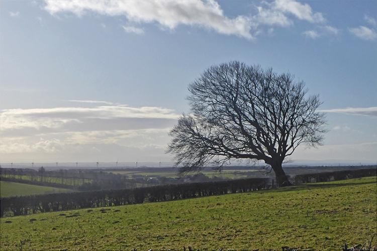 tree and gretna turbines
