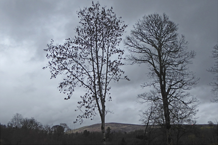 trees on old A7