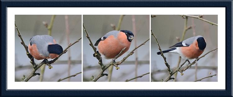 bullfinch panel