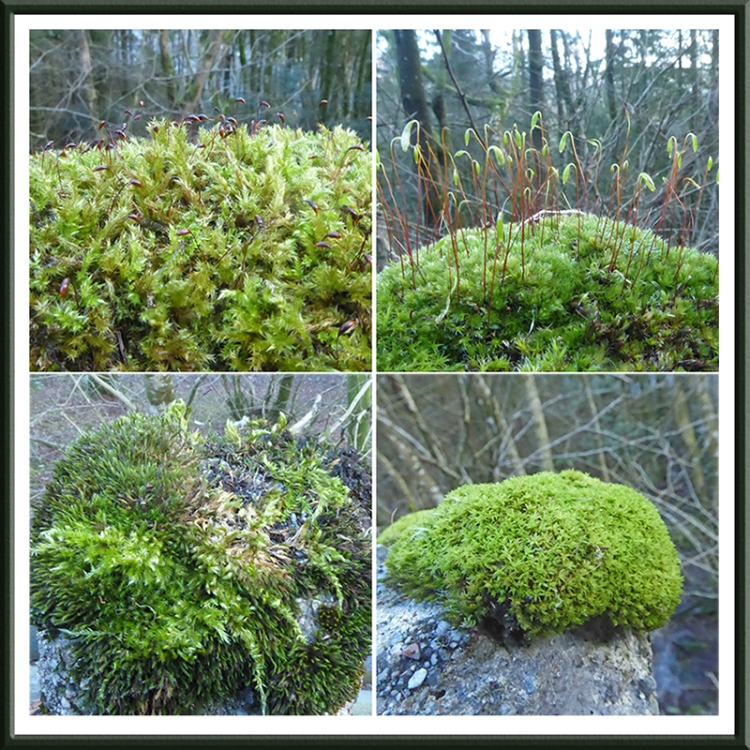moss on conrete fenceposts