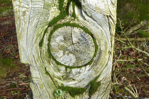 knothole with moss