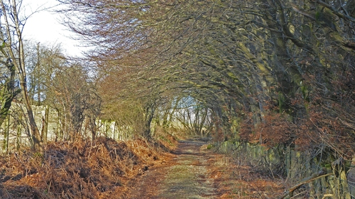Path near pathhead
