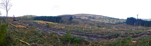 Becks wood felling