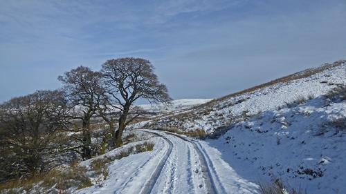 Warbla in snow